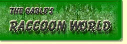 The Gable's Raccoon World - an extensive website all about raccoons